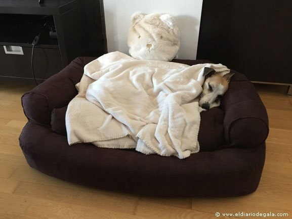 Snoozer Overstuffed Luxury Dog Sofa