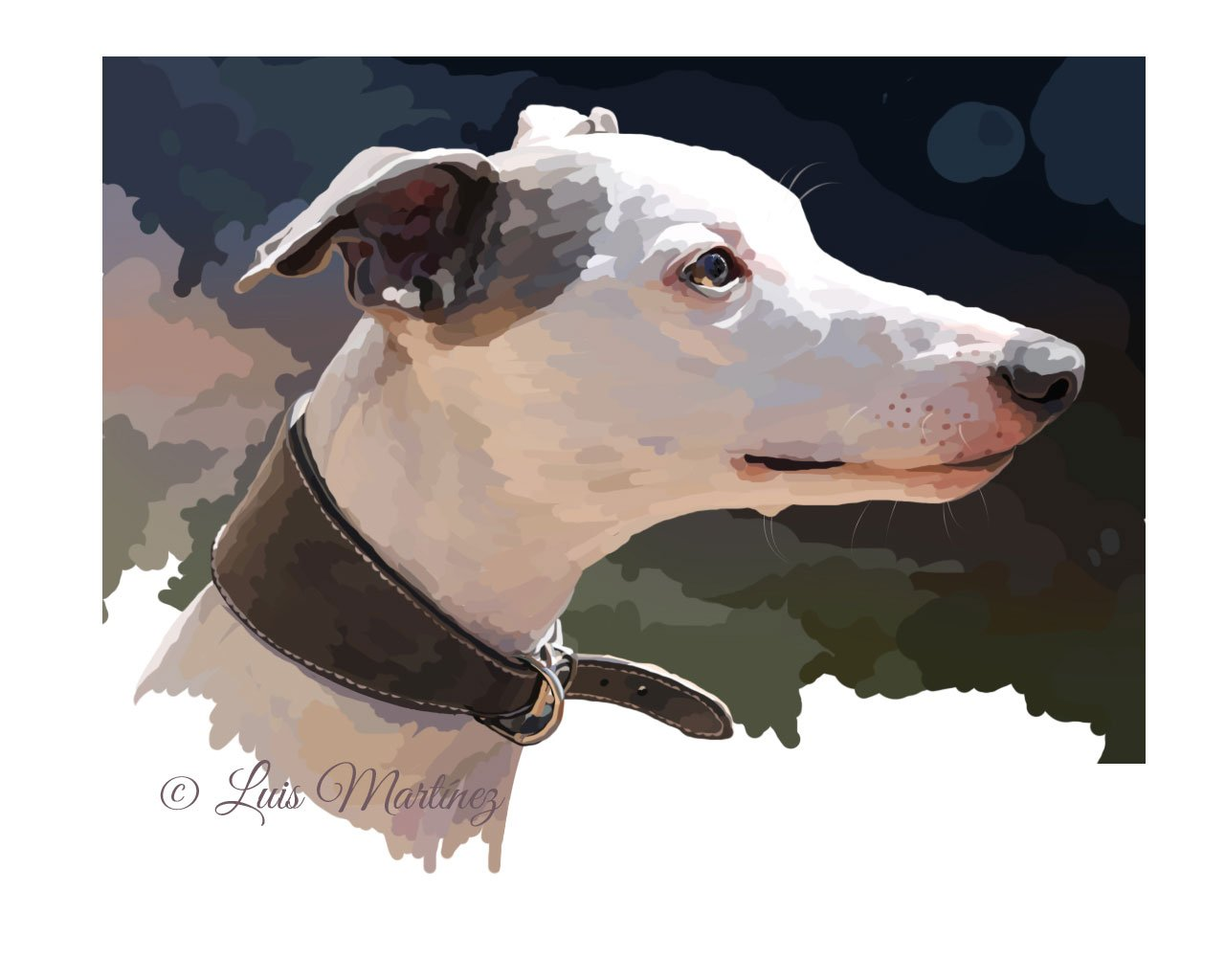 brillos_whippet