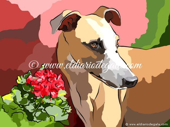 brilos_whippet_02