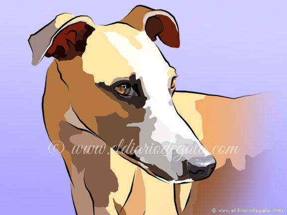brilos_whippet_03