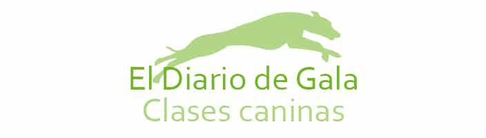 Clases de campeones Whippet