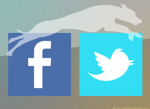 Redes sociales Whippet