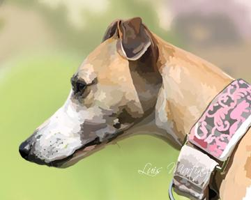 Whippet Gala