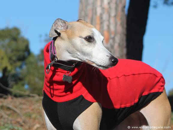 Luces para Whippet