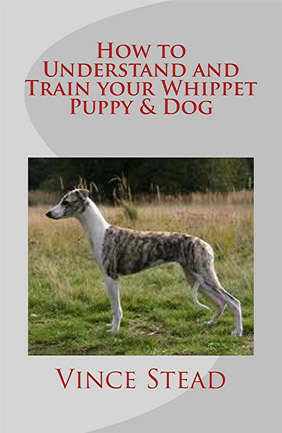 How to Understand and Train Your Whippet Puppy & Dog
