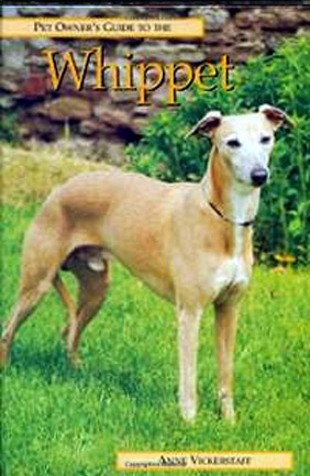 The Pet Owner's Guide to the Whippet