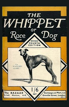 The Whippet or Race Dog