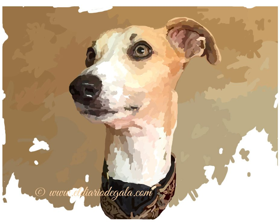 look_of_a_whippet