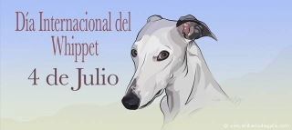 International Whippet Day 4July