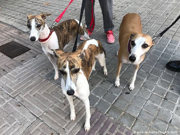 Whippets, Telma y Louise