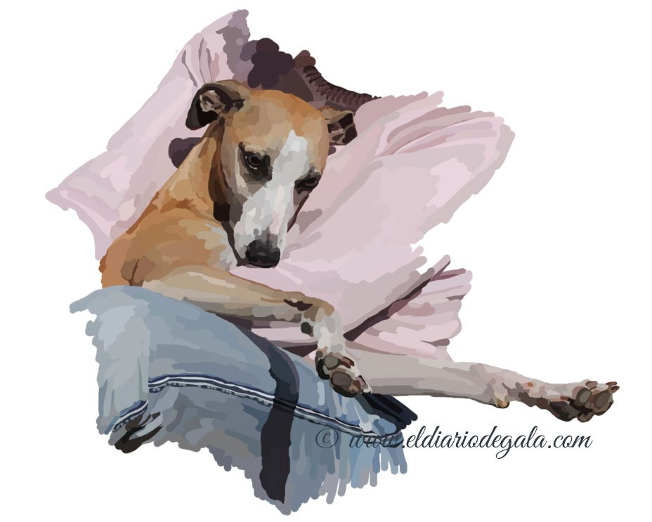 whippet_jeans