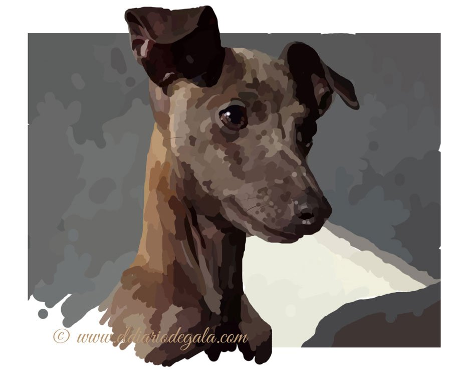 whippet_pipa